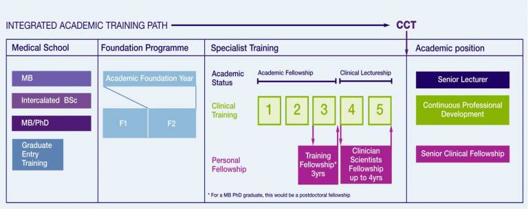 Flow Diagram of Career Pathways for Academic Medical Careers