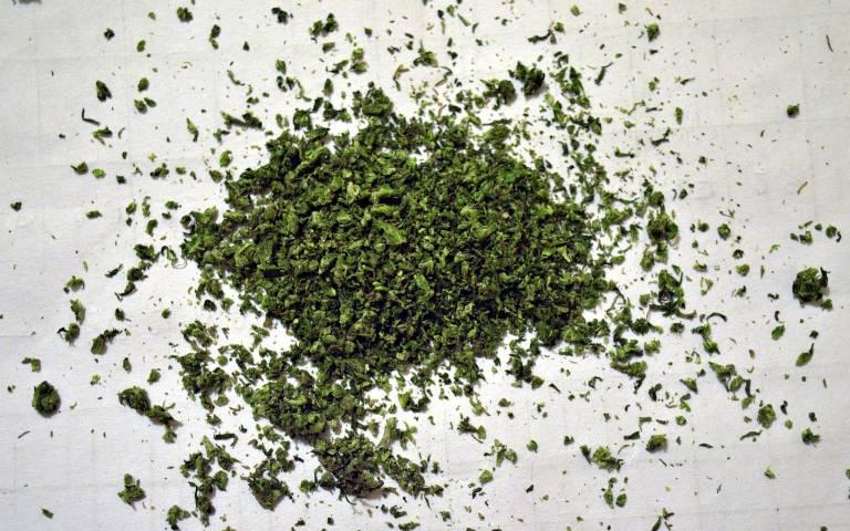 cannabis_resized.jpg