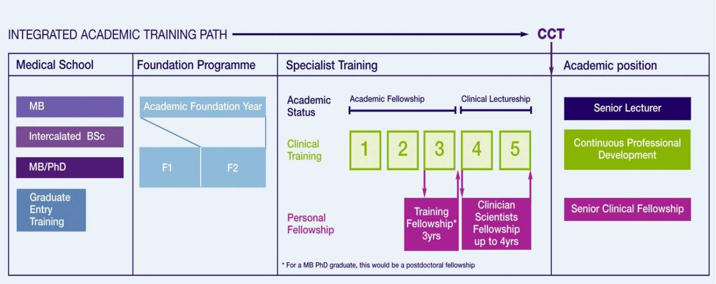Flow Diagram of Career Pathways for Academic Medical Careers