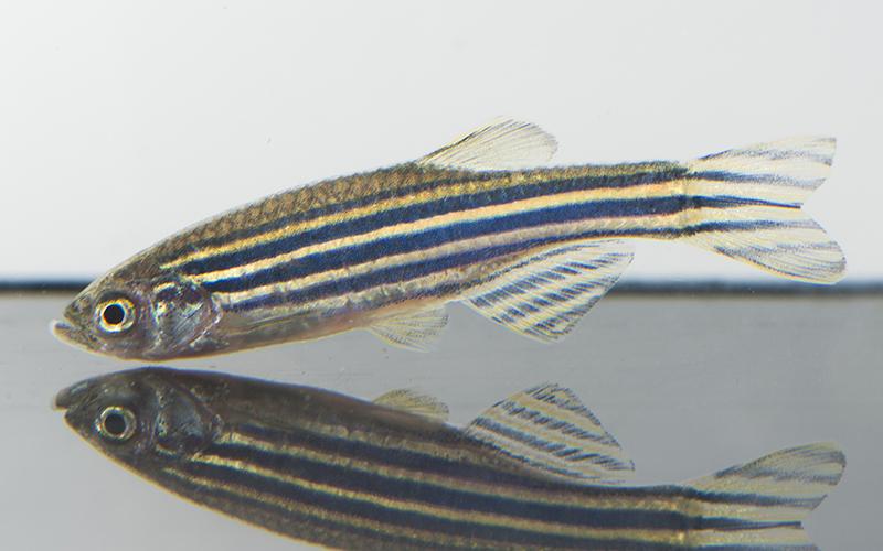 Fish Genomics