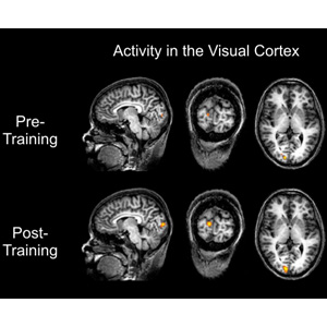 Brain activity pre and post training
