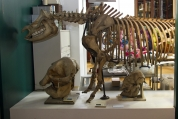 Sculpture Season - Grant Museum of Zoology