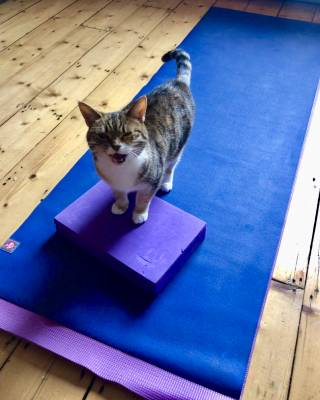 Cat on yoga mat