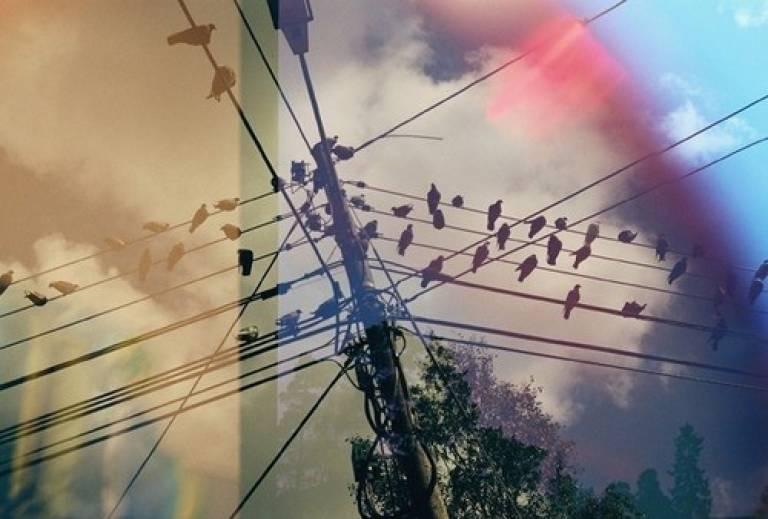 birds romanian…