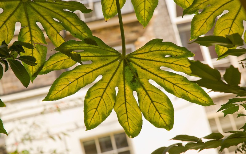 Leaves with a building behind