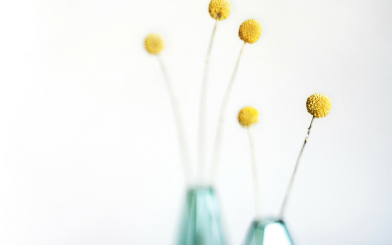 Blue vases with yellow flowers on white background