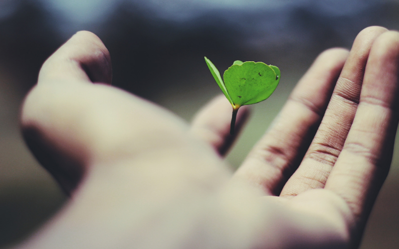 Leaf in someone's hand