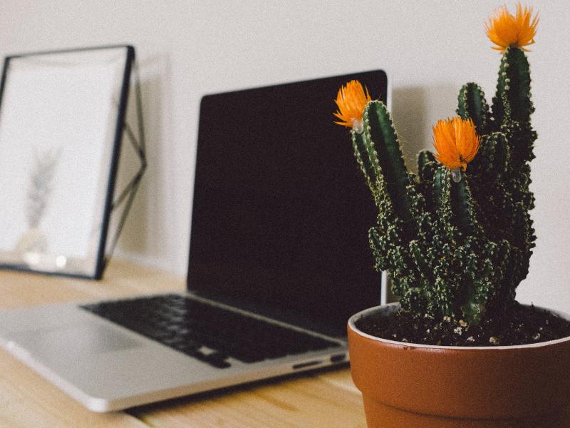 Laptop next to a cactus