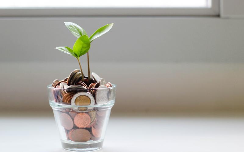 seedling in glass of pennies