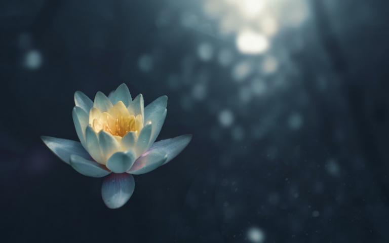 White flower against dark background