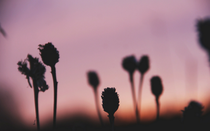 Silhouette of flowers in the wild at sunset