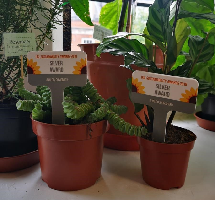 The awards- two plants
