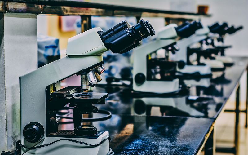 Photo of a row of microscopes