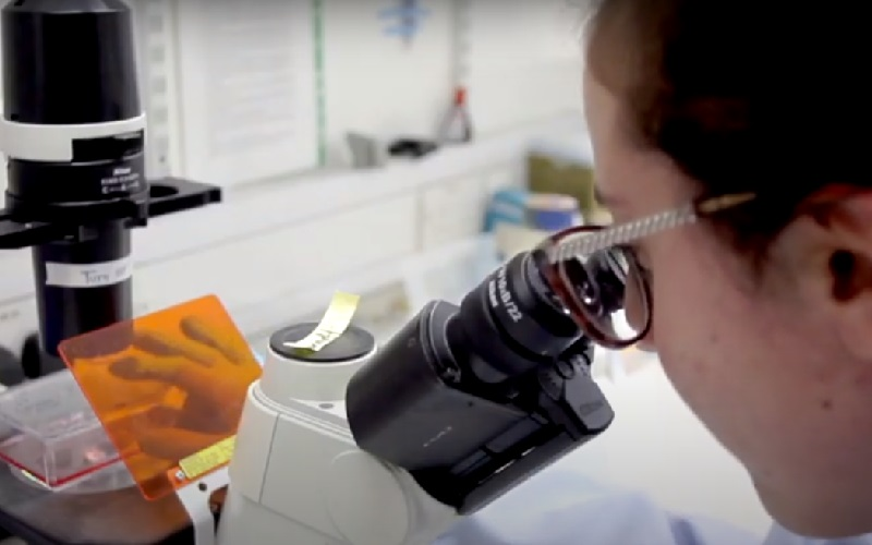 Researcher working with a microscope