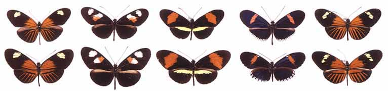 Evolutionary Adaptation Examples Examples of Evolutionary