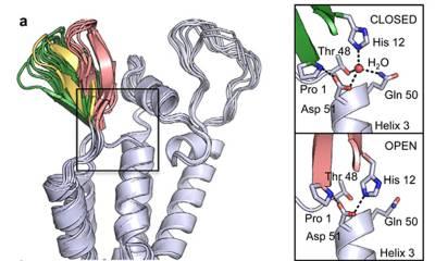 Jaques et al, Nature, 2016. Figure 1 HIV-1 capsid hexamers have a pore at the 6-fold symmetry axis.