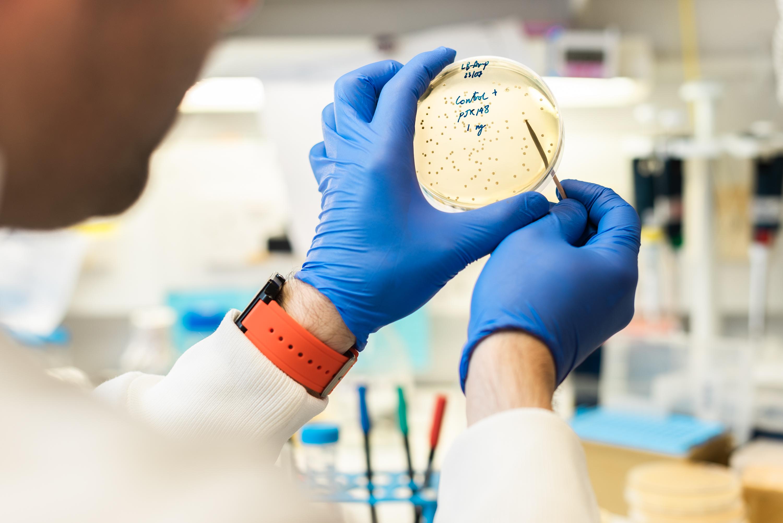 bacteria plate