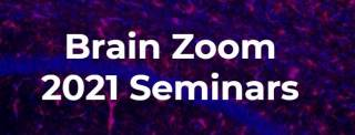Brain zoom seminars