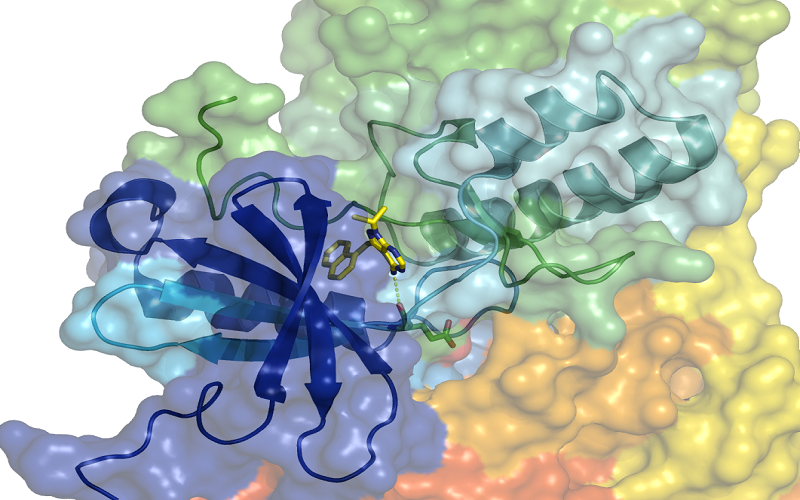 drug discovery selwood chan drug design, medicinal chemistry, biological assays